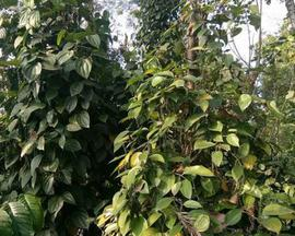 Cheap Agricultural Land in Idukki | Cheap Agricultural Land