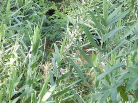 Agricultural Land in Attapadi - Agricultural Land for Sale in