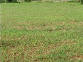 Less than 10 lakhs Agricultural Land in Coimbatore | Less